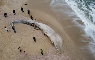 epa09023218 An aerial view made with a drone showing people viewing a dead 17-meter-long long Fin whale that washed up on the Nitzanim shoreline at the Mediterranean Sea near the city of Ashkelon, Israel, 19 February 2021. The Israeli Nature and Parks Authority is investigating the cause of death and said that Fin whales are not common on the eastern side of the Mediterranean  EPA/ABIR SULTAN