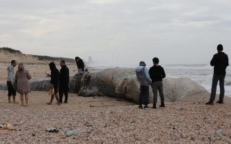 epa09023225 People view a dead 17-meter-long long Fin whale that washed up on the Nitzanim shoreline at the Mediterranean Sea near the city of Ashkelon, Israel, 19 February 2021. The Israeli Nature and Parks Authority is investigating the cause of death and said that Fin whales are not common on the eastern side of the Mediterranean  EPA/ABIR SULTAN