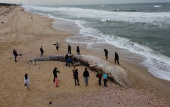 epa09023182 An aerial view shows people standing around a dead 17-meter-long fin whale washed ashore on the Nitzanim Shoreline at the Mediterranean Sea near the city of Ashkelon, Israel, 19 February 2021. The Israel Nature and Parks Authority is investigating the cause of death and claims that fin whales are not common on the eastern side of the Mediterranean  EPA/ABIR SULTAN