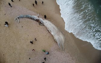epa09023184 An aerial view shows people standing around a dead 17-meter-long fin whale washed ashore on the Nitzanim Shoreline at the Mediterranean Sea near the city of Ashkelon, Israel, 19 February 2021. The Israel Nature and Parks Authority is investigating the cause of death and claims that fin whales are not common on the eastern side of the Mediterranean  EPA/ABIR SULTAN