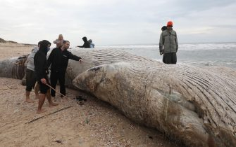 epa09023189 People stand around a dead 17-meter-long fin whale washed ashore on the Nitzanim Shoreline at the Mediterranean Sea near the city of Ashkelon, Israel, 19 February 2021. The Israel Nature and Parks Authority is investigating the cause of death and claims that fin whales are not common on the eastern side of the Mediterranean  EPA/ABIR SULTAN