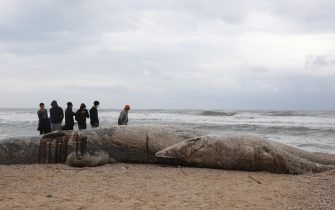 epa09023195 People stand around a dead 17-meter-long fin whale washed ashore on the Nitzanim Shoreline at the Mediterranean Sea near the city of Ashkelon, Israel, 19 February 2021. The Israel Nature and Parks Authority is investigating the cause of death and claims that fin whales are not common on the eastern side of the Mediterranean  EPA/ABIR SULTAN