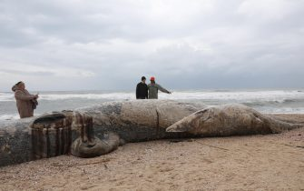 epa09023192 People stand around a dead 17-meter-long fin whale washed ashore on the Nitzanim Shoreline at the Mediterranean Sea near the city of Ashkelon, Israel, 19 February 2021. The Israel Nature and Parks Authority is investigating the cause of death and claims that fin whales are not common on the eastern side of the Mediterranean  EPA/ABIR SULTAN