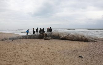 epa09023194 People stand around a dead 17-meter-long fin whale washed ashore on the Nitzanim Shoreline at the Mediterranean Sea near the city of Ashkelon, Israel, 19 February 2021. The Israel Nature and Parks Authority is investigating the cause of death and claims that fin whales are not common on the eastern side of the Mediterranean  EPA/ABIR SULTAN