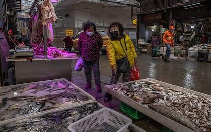 Oms, interrompere vendita animali selvatici in mercati cibo