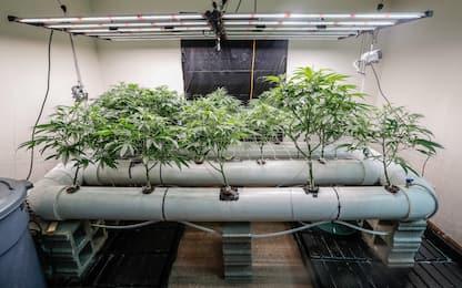 Messico, via libera alla legalizzazione della marijuana
