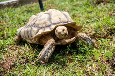 Madagascar, mangiano carne di tartaruga: 19 morti