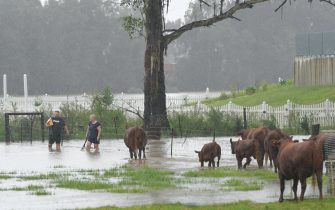 epa09084876 Farmers on Grange Road in Schofield tend to the stock due to heavy rain in Sydney, Australia, 20 March 2021. More rain is forecast for the New South Wales coast and other parts of the state, with flood warnings in place and the premier advising residents to stay home.  EPA/SIMON BULLARD AUSTRALIA AND NEW ZEALAND OUT