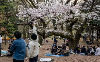 YOYOGI PARK, TOKYO, JAPAN - 2021/03/27: People sit under cherry blossom trees (sakura) at the Yoyogi Park in Tokyo. Sakura area is blocked by the orange lines to avoid crowds gathering nearby. People enjoy the cherry blossom from a distance. Japanese government ended the state of emergency on 21st March, but urged people not to gather to prevent a resurgence of COVID-19 infections. (Photo by Viola Kam/SOPA Images/LightRocket via Getty Images)