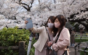 CHIYODA, TOKYO, JAPAN - 2021/03/26: Women take selfies in front of blooming Sakura trees at the Chidorigafuchi Park near the Imperial Palace in Tokyo. After the state of emergency was cancelled on March 21st 2021 in Tokyo, residents can enjoy the Hanami (Cherry blossom viewing) season with minimal restrictions. Although picnics, gathering of large crowds and alcohol consumption is prohibited, people can walk freely through public parks. (Photo by Stanislav Kogiku/SOPA Images/LightRocket via Getty Images)