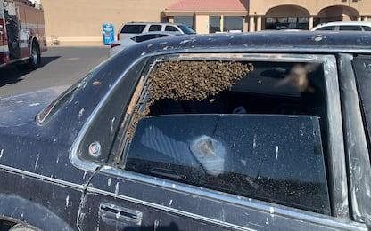 New Mexico, parcheggia l'auto e al ritorno trova sciame di api. VIDEO