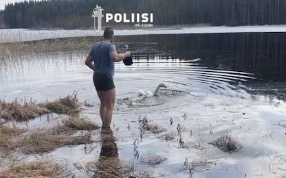 Finlandia, poliziotto salva cigno rimasto intrappolato in rete. VIDEO