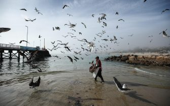 epa07545813 A fisherman works surrounded by seagulls at a port of the coast of El Quiosco, in Valparaiso, Chile, 03 May 2019.  EPA/Alberto Valdes