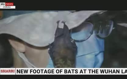 """Covid, SkyNews Australia: """"Pipistrelli nel laboratorio di Wuhan"""""""