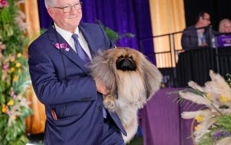 TARRYTOWN, NEW YORK - JUNE 13: Wasabi the Pekingese, with handler/owner David Fitzpatrick, wins Best in Show at the 145th Annual Westminster Kennel Club Dog Show on June 13, 2021 in Tarrytown, New York. Spectators are not allowed to attend this year, apart from dog owners and handlers, because of safety protocols due to Covid-19. (Photo by Michael Loccisano/Getty Images)
