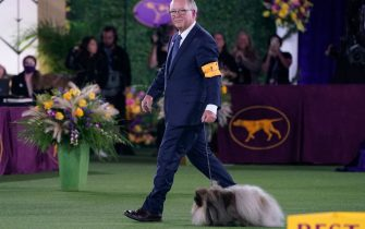 """David Fitzpatrick with his Pekingese """"Wasabi"""" are seen after winning Best in Show at the 145th Annual Westminster Kennel Club Dog Show June 13, 2021 at the Lyndhurst Estate in Tarrytown, New York. - Spectators are not allowed this year, apart from dog owners and handlers, because of safety protocols due to Covid-19. (Photo by TIMOTHY A. CLARY / AFP) (Photo by TIMOTHY A. CLARY/AFP via Getty Images)"""