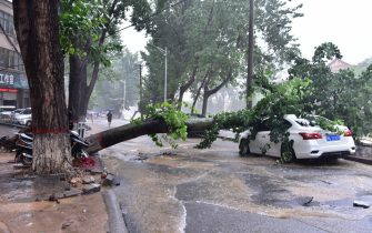 DENGFENG, CHINA - JULY 20: A car is damaged by a fallen tree on July 20, 2021 in Dengfeng, Zhengzhou City, Henan Province of China. Torrential rains hit Henan since July 16, causing floods in many parts of the province on Monday and Tuesday. (Photo by VCG/VCG via Getty Images)