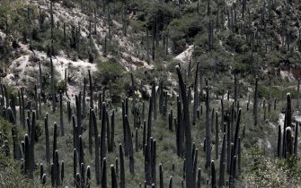 La valle di Tehuacan-Cuicatlan