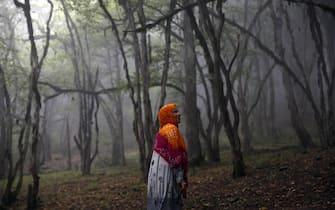 Le Foreste ircane