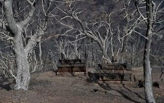 Alberi devastati da uno degli incendi che hanno colpito l'Algeria nell'agosto 2021