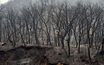 Un boso devastato dagli incendi in Algeria dell'agosto 2021