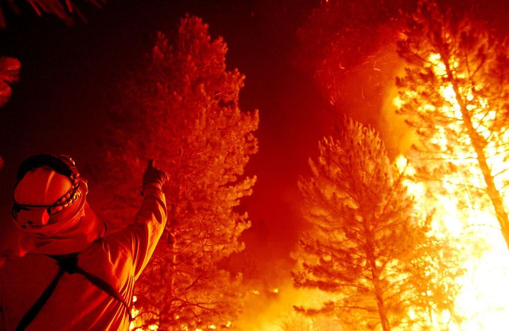 Sequoie in fiamme