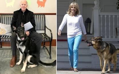 Usa, i due cani di Joe Biden allontanati dalla Casa Bianca