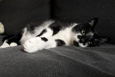 È il World Cat Day: 10 curiosità sul mondo dei gatti