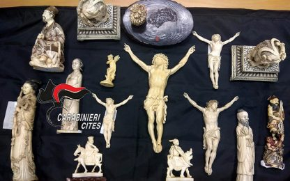Torre del Greco, sequestrate sculture in avorio da zanne di elefante