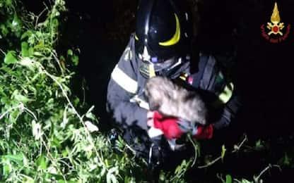 Benevento, vigili del fuoco recuperano 2 cuccioli di cane in un dirupo