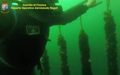 Napoli, sequestrate 100 tonnellate di mitili