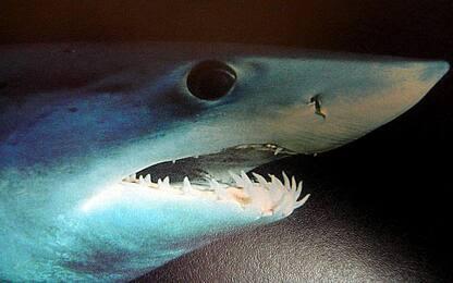 Catania, sequestrata carcassa di squalo di 4 metri: una denuncia
