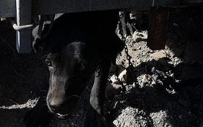 Catania, discarica abusiva e cani in mezzo ai rifiuti: due denunce
