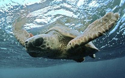Sabaudia, bambini salvano una tartaruga Caretta caretta