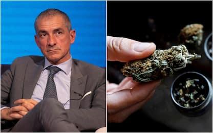 Costa: presto bandi per coltivazione cannabis terapeutica a uso medico