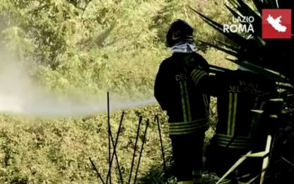 Incendio a Roma, rifiuti e sterpaglie in fiamme in zona Boccea. VIDEO
