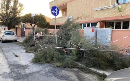 Maltempo a Fiumicino, alberi caduti e nottata di interventi
