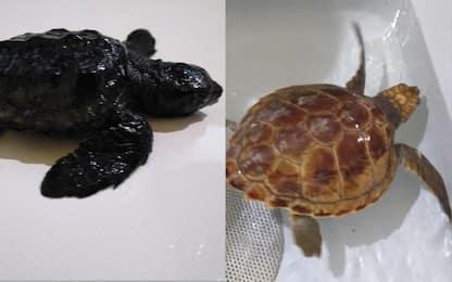 Maltempo nel Lazio, due piccole tartarughe salvate dalla mareggiata