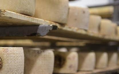 Escherichia Coli, richiamato dal mercato lotto di formaggio pecorino