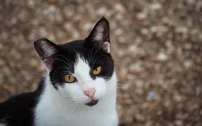 Mistero a Lesignano de' Bagni, il paese dei gatti scomparsi