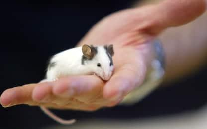 Obesità: studio sui topi apre la strada a un nuovo trattamento