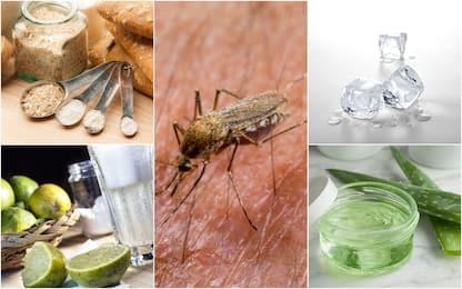 Punture di zanzara, cinque rimedi naturali contro il prurito