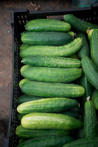 A picture taken at the Porquerolles Island near Hyeres, southeastern France, on June 21, 2018 shows a box of cucumbers, part of Copains (Collections patrimoine insertion) association run with unemployed people. (Photo by BERTRAND LANGLOIS / AFP)        (Photo credit should read BERTRAND LANGLOIS/AFP via Getty Images)
