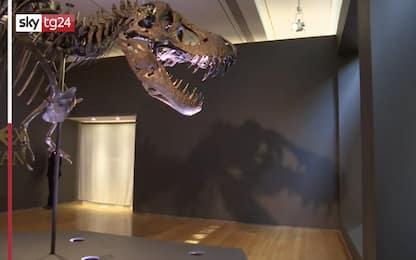 Lo scheletro del T-Rex Stan sarà messo all'asta a New York