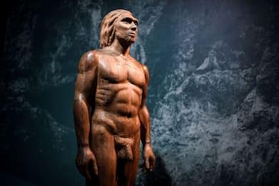 Coronavirus, studio tedesco: gene Neanderthal nei casi gravi