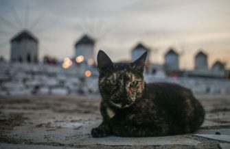 A cat lays on the ground as the sun sets behind the landmark windmills on the Greek island of Mykonos on October 6, 2020 in Chora. (Photo by David GANNON / AFP) (Photo by DAVID GANNON/AFP via Getty Images)