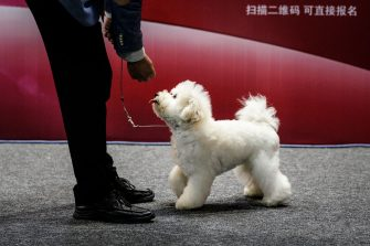 WUHAN, CHINA - SEPTEMBER 27: (CHINA OUT) A man leads a dog during the National General Kennel Club branch Competition on September 27 , 2020 in Wuhan, Hubei province, China. As there have been no recorded cases of community transmission in Wuhan since May, life for residents is returning to normal. (Photo by Getty Images)
