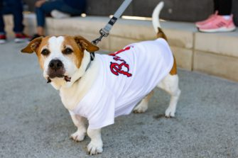 ATLANTA, GA - OCTOBER 1: A dog wearing an Atlanta Braves jersey is seen inside The Battery Atlanta as fans gather to watch Game Two of the National League Wild Card Series between the Cincinnati Reds and the Atlanta Braves on October 1, 2020 in Atlanta, Georgia. (Photo by Carmen Mandato/Getty Images)