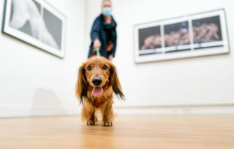 "A visitor and his dog visit the William Wegman exhibition ""Being Human"" on October 4, 2020 in the Hague Fotomuseum which is open to pets today to mark World Animal Day. (Photo by Bart Maat / ANP / AFP) / Netherlands OUT (Photo by BART MAAT/ANP/AFP via Getty Images)"