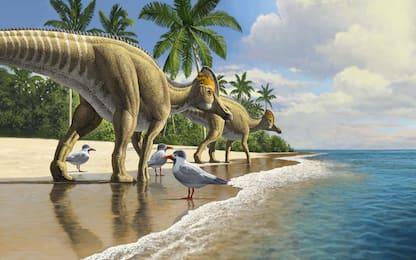 I dinosauri potevano attraversare gli oceani: la prova nei fossili